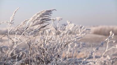 Zimowy krajobraz przedstawiający oszronione krzewy